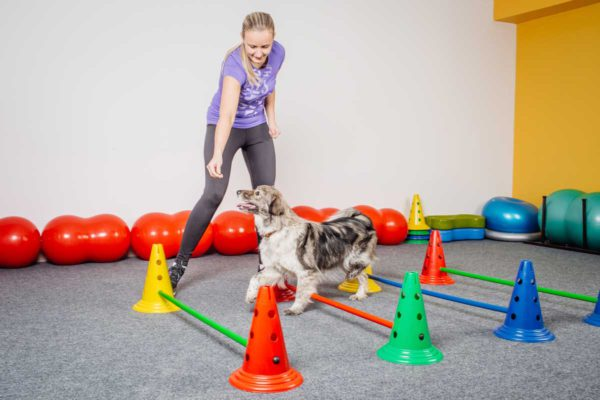 tierphysiotherapie-training